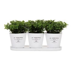 Torre & Tagus - Set of 3 Jardinier Round Planters on Tray in White