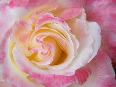 Ultimate Bliss in Sensual Rose Petals by Mary Sedivy