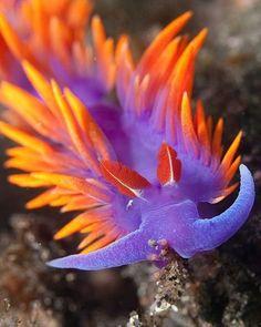 Most Beautiful Unseen Sea Creatures (25).jpg 560×700 pixels (sea slug. colorful,sea)