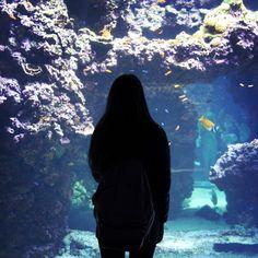 #Rocher #tropical #fish #montecarlo #monaco #aquarium #friends #lovely #colours #beautiful #instamood #instaphoto #instatravel #instacool by martipasso from #Montecarlo #Monaco