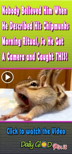 At 40 Seconds I Can T Stop Smiling Chipmunks Morning Ritual Funnyvideo Viralvideo Mostviewed