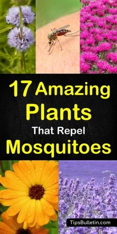 Garden Landscaping Discover 17 plants that repel mosquitoes fast so you can enjoy your summer in your backyards and patio without these insects. From herbs to lavender, lemongrass, mints up to repelling plants for pots at your home. Plants That Repel Bugs, Cool Plants, Backyard Plants, Outdoor Plants, Plants For Landscaping, Landscaping Ideas, Landscaping Edging, Outdoor Flowers, Outdoor Spaces