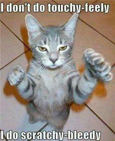 Isn't this most cats? It's definitely mine LOL