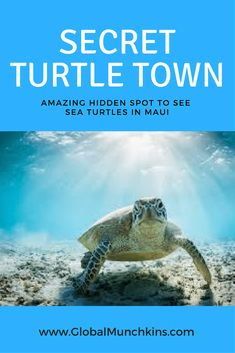 I've discovered a Hidden Gem, [the Secret, No Snorkel] Turtle Town Maui Secret spot to see sea turtles- Turtle Town Maui Hawaii Maui, Lahaina Maui, Maui Beach, Oahu, Kahului Maui, Best Beaches In Maui, Kaanapali Maui, Hawaii Life, Honeymoon Vacations