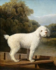 """White Poodle in a Punt,"""