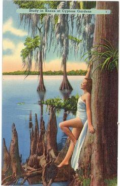 1930s Florida postcard of Cypress Gardens in Winter Haven, Florida.