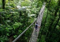 Costa Rica! Did someone say zip lining?! You also get to kayak, snorkel, and go searching for iguanas, sloths, monkeys, and much more!
