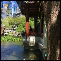 Chinese Garden of Friendship, Darling Harbour Sydney Gardens, Darling Harbour, Chinese Garden, Friendship, Beautiful
