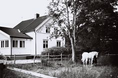 Hvit hest, hvitt hus, landlig, white, horse, country house Horses, Country, Outdoor, Outdoors, Rural Area, Country Music, Outdoor Games, The Great Outdoors, Horse