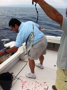 Micro atunes rojos, todos de vuelta al mar