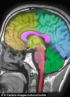 A lack of sleep 'damages the #brain in a similar way to being hit on the head' #neuroskills