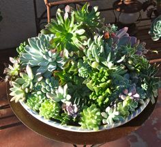 Succulents planted in a recycled container