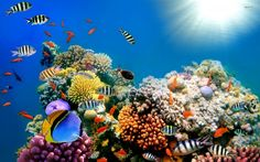 Amazing Coral Reefs