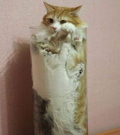 cute cats Pics Of Cute Cats, Chaplin Film, Funny Cats, Funny Pictures, Animals, Fanny Pics, Animales, Animaux, Funny Pics