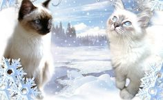 Cat Wallpaper, Winter, Christmas, Animals, Recherche Google, Crochet, Merry Christmas, Gatos, Merry Little Christmas