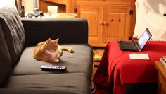 Couch Potato (via consumerist)