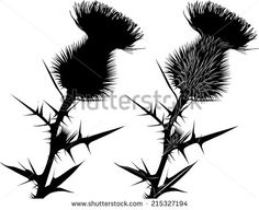 thistle - stock vector