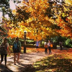 Beautiful everyday scenery for #UofSC students walking to class. Photo by maegan_g: http://instagram.com/p/g3hBZGoujG/