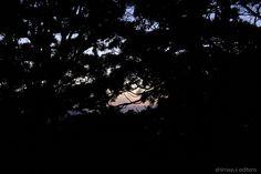 森の夕焼け。