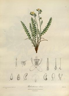 Illustrations of the botany and other branches ...