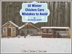 Good thoughts here. Chickens fare much better in cold temperatures than in hot weather due to their unique physiology and ability to regulate their body temperatures, but they still need our help to create the ideal environment in which to survive winter. Portable Chicken Coop, Best Chicken Coop, Chicken Chick, Chicken Coop Plans, Building A Chicken Coop, Chicken Runs, Chicken Coops, City Chicken, Chicken Feeders
