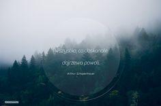 Teksty – tokocham.pl