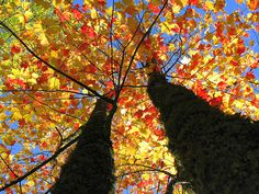 Autumn's Colors  by By Micky**