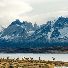 """""""En esta Región Austral de nuestra Patagonia chilena, con su imponente naturaleza, nos hace pensar que somos tan pequeños e imperfectos a su lado""""  Torres del Paine, Puerto Natales, Patagonia, Chile. Le Mouton Vert / @lemoutonvert"""