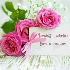 Find the best Happy Tuesday Pics And Quotes greetings and pictures here. Browse our great collection of tuesday pictures and choose your fa. Happy Tuesday Pics, Happy Tuesday Morning, Tuesday Greetings, Tuesday Pictures, Good Morning Cards, Good Morning Flowers, Good Morning Messages, Good Morning Greetings, Goog Morning