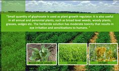 http://alliedmarketresearch.blogspot.in/2014/10/glyphosate-applications-are-pushing.html