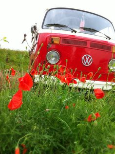 Betsy between the poppy flowers... by Artyvee, via Flickr