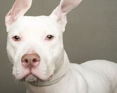 Fotos creativas y hermosas  para promover la adopción de perros.   #fotografía…