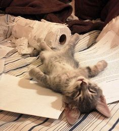 Cyoot Kitteh of teh Day: Destruction is Hard Work