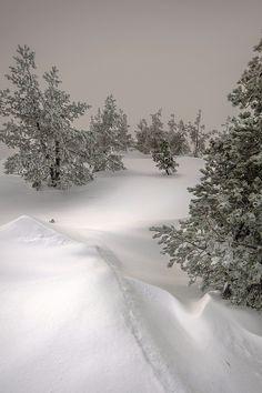 """ llego la nieve by (Gustavo Meana) "" Winter Snow, Winter White, Beautiful World, Beautiful Places, I Love Snow, Weather Seasons, Winter's Tale, Winter Scenery, Snow Scenes"