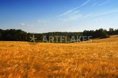"""the grainfield"" von Bernd Hoyen #fotografie #photography #fotokunst #photoart #getreidefeld #getreidefelder #grainfield #grainfields #golden #gelb #yellow #natur #nature #landschaft #landschaften #landscape #landscapes #schweden #sweden #smaland"