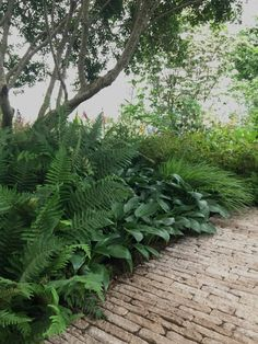 Nice Gardens At The Chelsea Flower Present 2018 - Inexperienced foliage plants- Rising Ni. , Nice Gardens At The Chelsea Flower Present 2018 - Inexperienced foliage plants- Rising Ni. Nice Gardens At The Chelsea Flower Present 2018 - Inexper. Ferns Garden, Herb Garden Design, Shade Garden, Garden Paths, Potager Garden, Garden Beds, Woodland Plants, Woodland Garden, Garden Ideas South Africa