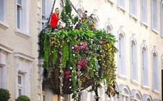 The world's largest hanging basket measuring 20ft wide and 10 ft high and weighing a quarter of a ton
