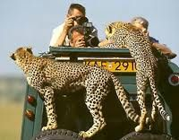Tanzanian Safari...http://tanzania.safari.co.za/Tanzanian_Safari_Tours-travel/6-day-serengeti-safari-tour.html