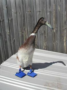 ducks in slippers