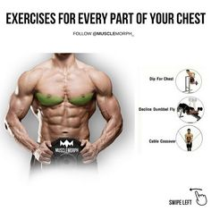 """1,795 Likes, 12 Comments - MuscleMorph® (@musclemorph_) on Instagram: """"(Swipe Left) exercises for every part of your chest. LIKE/SAVE it if you found this useful and…"""""""