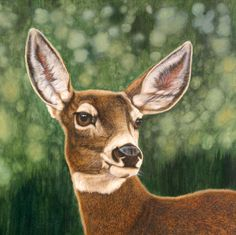 Queen of the Forest- A White-tailed Doe - Animal Art
