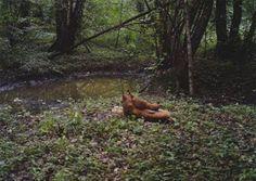 """Il y a encore des animaux dans la """"zone morte"""" de Tchernobyl [Animal Animaux Europe insolite Nature Nucléaire Ukraine]"""