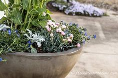 Container gardening in the shade can be a bit tricky. This list of blue plants for containers in the shade will have the pots on your patio, walkway or porch looking beautiful all summer long. Potted Plants For Shade, Shade Garden Plants, Blue Plants, Tall Plants, Flowering Plants, Window Box Flowers, Shade Flowers, Blue Flowers, Window Boxes