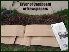 """Kill Weeds Organically By placing cardboard, newspaper or for larger lawn areas that you are trying to kill off try black plastic. Leave in place for several weeks  --according to climate. Remove and till the area and remove all roots -- especially if killing off deep rooted grass such as Bermuda grass.  A note about this method -- using black or clear visqueen (plastic) and """"bake"""" the grass or weeds in the area you wish to remove weeds or grass from using good ole sunlight. Seedland.com."""