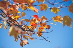 autumn leaves branches -  autumn leaves branches free stock photo Dimensions:3888 x 2592 Size:0.68 MB  - https://www.welovesolo.com/autumn-leaves-branches/