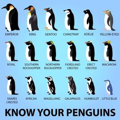 Know your penguins...