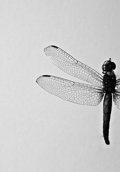 absinthius:    Wings