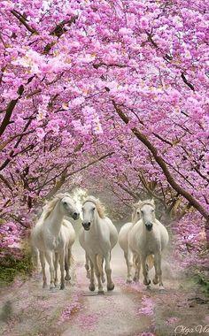 I like white horses Cute Horses, Pretty Horses, Horse Love, Horse Photos, Horse Pictures, Beautiful Creatures, Animals Beautiful, Animals And Pets, Cute Animals