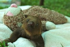 Watch sleepy sloths say goodnight...awwww