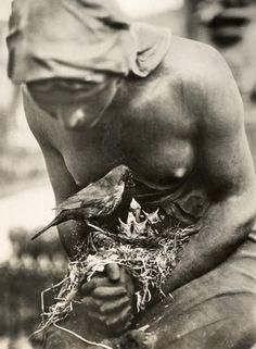 Blackbird Nest on Graveyard Statue, Berlin Nationaal Archief Germany 1932